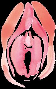 gynomed avgerinos genital surgery